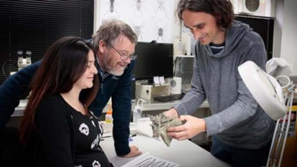 Doctors Vanesa De Pietri, Paul Scofield and Gerald Mayr examine a Crossvallia waiparensis fossil at Canterbury Museum. (Canterbury Museum)