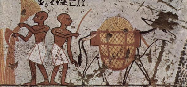 Donkey in an Egyptian painting c. 1298–1235 BC