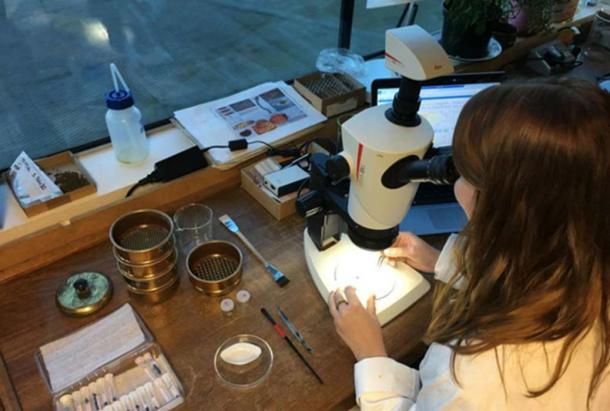 Dr. Lara Gonzalez exams the sample. (GOV.UK / Open Government License v1.0)