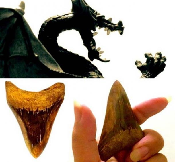 """Dragon tongues"" or fossilized shark teeth have been used as amulets, in divination, and medicine in the Mediterranean. (Legendz Collective)"