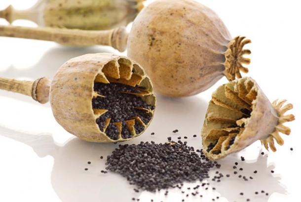 Dried poppy seeds. (HLPhoto / Adobe)