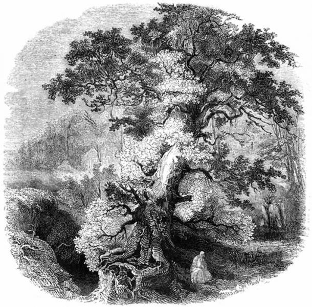 'The Druid Grove.'