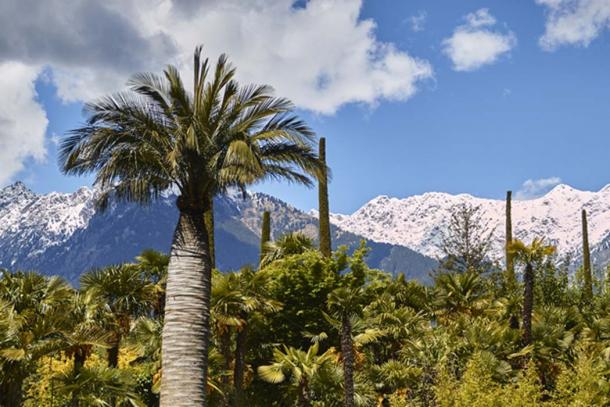 During the Eemian period, palm trees grew in Alaskan Panhandle. (freedom_wanted / Adobe)
