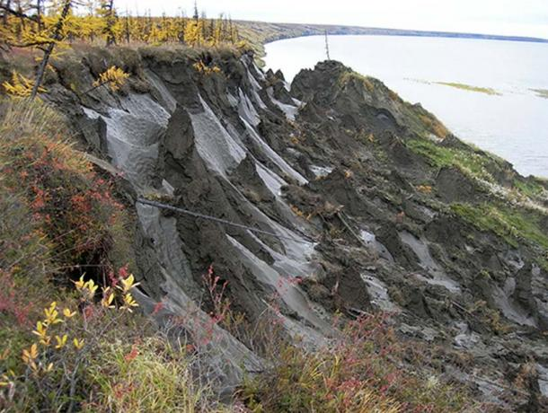Duvanny Yar, area of permafrost where one of the worms was gathered. (Image: Nikita Zimov)