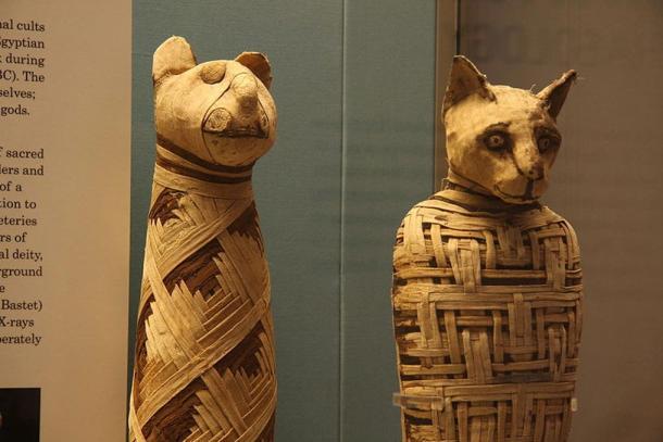 Egyptian animal mummies in the British Museum.
