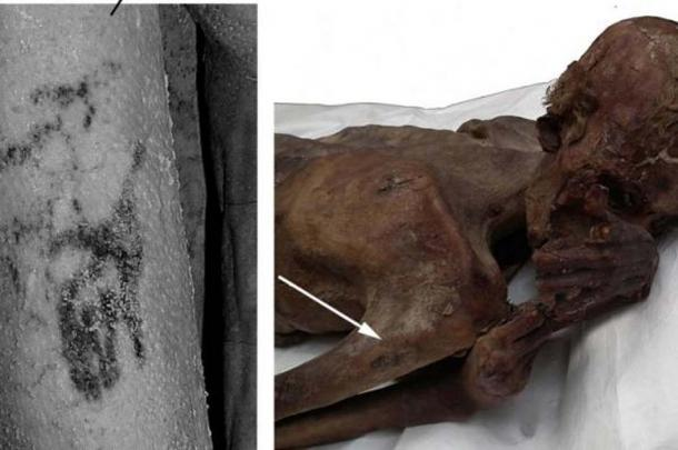 Researchers found the image of a wild bull and Barbary sheep inked on the arm of an ancient Egyptian mummy.