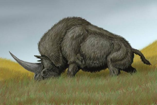 Artist's impression of an Elasmotherium sibiricum