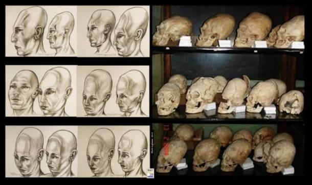 Elongated skulls in a museum in Romania