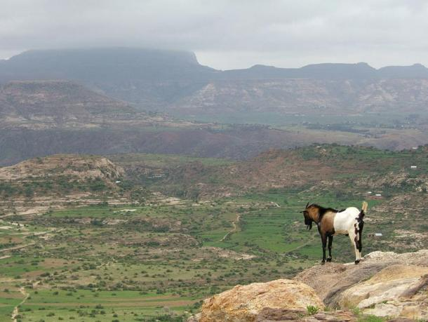 The Ethiopian Highlands, where the Mota Cave and bones were found.