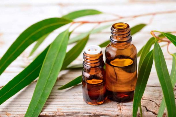 Eucalyptus essential oil is used in Ayurvedic medicine to help drain mucus congestion. (amy_lv / Adobe Stock)