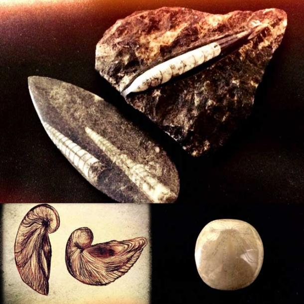 European fossils used for medicine, taken for lightning strikes(belemnites,) devil toe nails(gryphaea shells), eggs(sea urchins) (Legendz Collective)