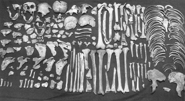 Evidence for the occurrence of cannibalism: the complete collection of human bones from Room 2 of the AD 1150–1200 Anasazi pueblo Houck K, in Arizona.