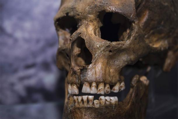 Evolutionary geneticists conducted a genome study of Neanderthals using remains found in caves in Russia and Croatia. (gerasimov174 / Adobe Stock)