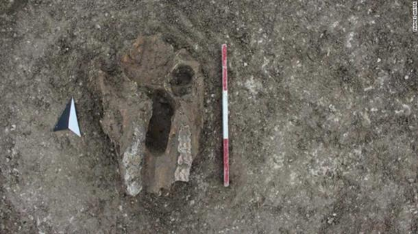Example of an animal skull, probably from a horse, placed in one of the Iron Age pits at Oxfordshire. (Thames Water)