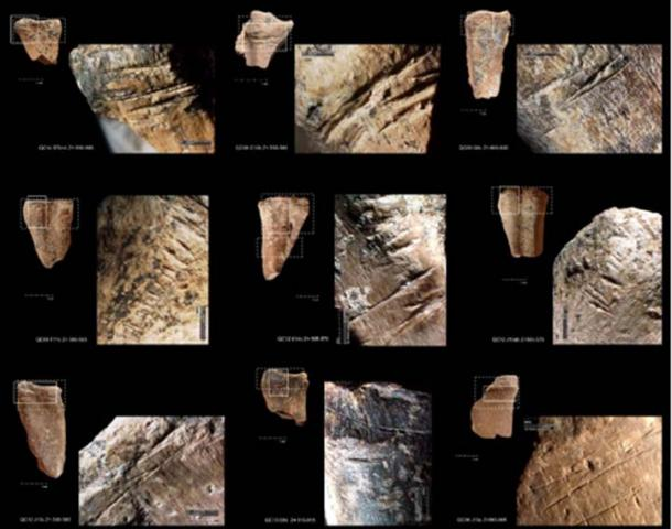 Examples of cut marks associated to disarticulation and/or skinning on deer metapodials from Amudian and Yabrudian levels of Qesem Cave. (Image: Ruth Blasco/ Science Advances)