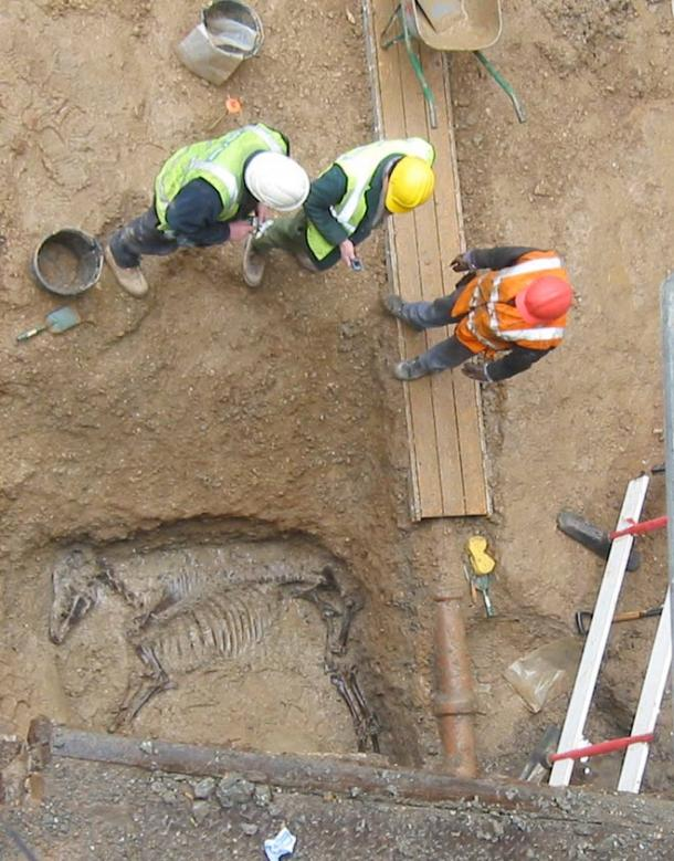 Excavating a horse burial in 2006