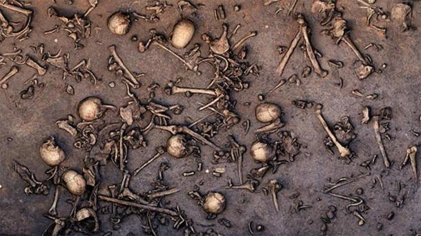 Excavation of an ancient battlefield from the Bronze Age in northern Germany revealed signs of an immense battle, such as closely packed bones, as seen in this 2013 photo of the site. One area of 12 square meters is said to have held 1478 bones, including 20 skulls. (Landesamt für Kultur und Denkmalpflege Mecklenburg-Vorpommern/Landesarchäologie/C. Harte-Reiter)