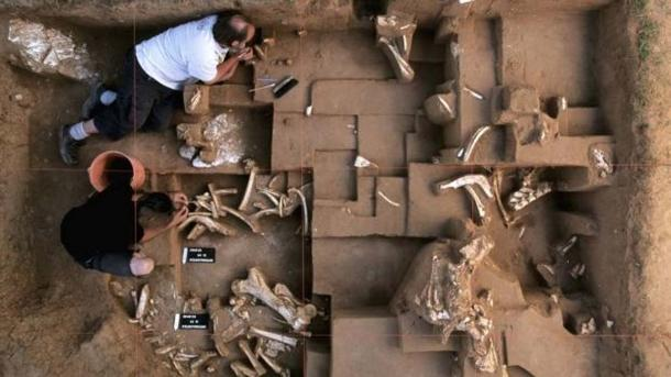 Excavations at the Untermassfeld site in Germany have provided more than more than 14,000 large animal bones.