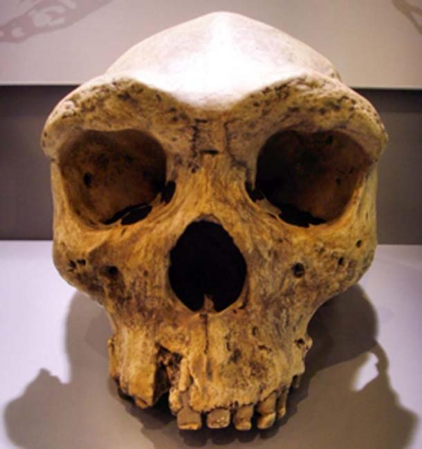 Extinct species of archaic hominids from 130,000 years ago. (Gerbil / CC BY-SA 3.0)