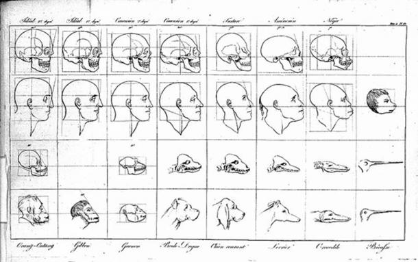 Faces demonstrating points of physiognomy, Lavater, 1806-1809.