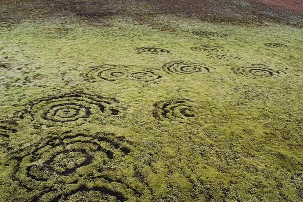 Fairy rings in moss in Iceland.
