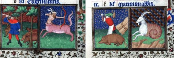 Fattening in November and slaughtering in December. Courtesy of the Brotherton Library, University of Leeds