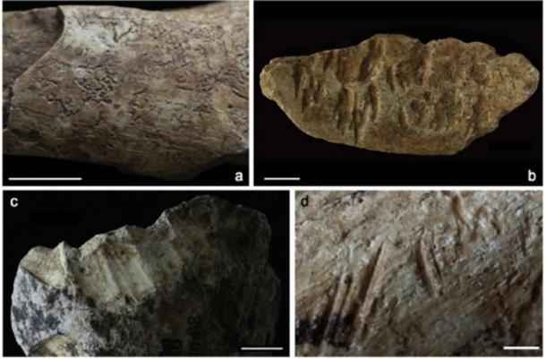 Faunal remains from Ma'anshan damaged by root etching (a), carnivore gnawing (b), porcupine gnawing (c), and butchery (d). Scales = 1 cm