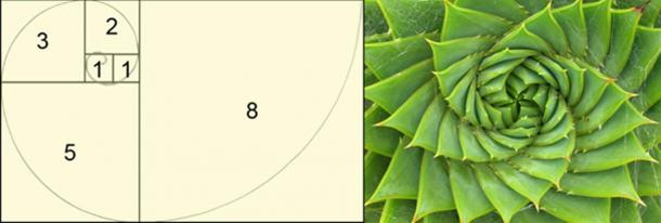 The Fibonacci Sequence (CC BY 3.0) and Spiral aloe. (CC BY SA 2.0) Leonardo Fibonacci was one of Michael Scot's students.