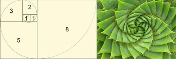 The Fibonacci Sequence (CC BY 3.0) and Spiral aloe. (CC BY SA 2.0) Leonardo Fibonacci was one of Michael Scot's students.