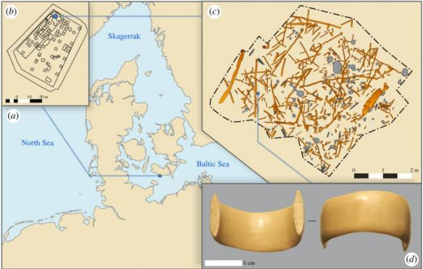 Figure 1. (a) Location of the site on the southern part of Lolland, Denmark. (b) Overview of site MLF906-II where the ring was found in the northern part. (c) Digitized archaeological wood and stones found in a small section of the site, from where the ring was found. Digitization based on seven three-dimensional models obtained by Structure from Motion. (d) Photograph of the ring. (Theis Jensen et al. The Royal Society Publishing)