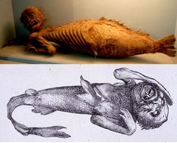 [Top] Fiji Mermaid, in the Folklore section at the Haus der Natur (House of Nature), a natural history collection in Salzburg, Austria. (CC BY-NC-SA 2.0 ) [Bottom] P.T. Barnums Feejee mermaid ( Public Domain )