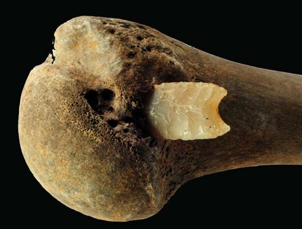 Flint arrowhead in the joint end of a right humerus from the Bronze Age battlefield in Tollense Valley, Photo: S. Suhr, LAKD M-V, Landesarchäologie