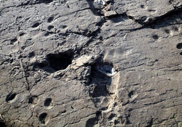 Footprints at the second, more recently recorded site in Laetoli. (Marco Cherin)