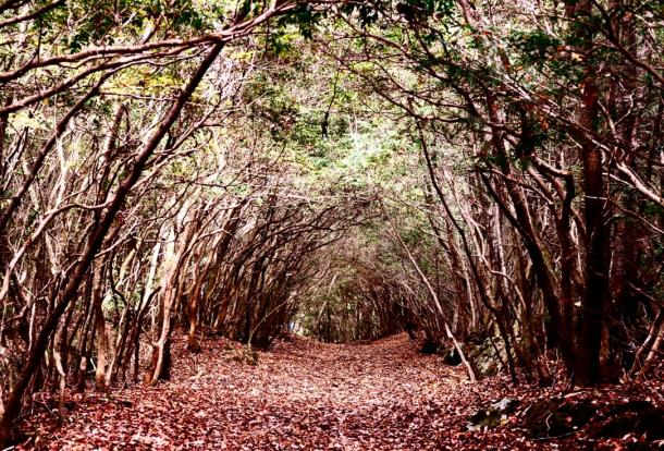 Forest of Aokigahara