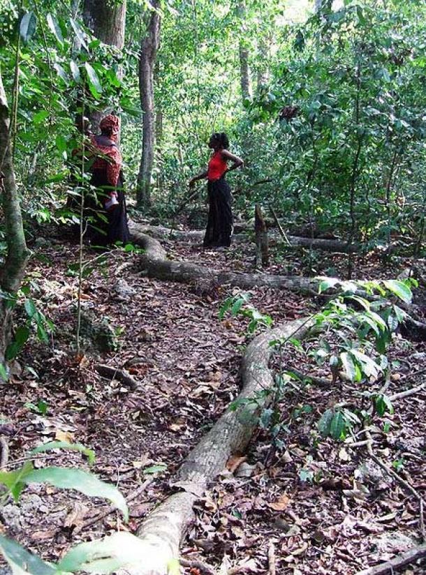 Mijikenda Kaya Forest. (Victor Ochieng/CC BY-SA 2.0)