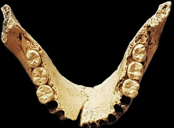 Fossil of Neanderthal teeth found in the Sima de los Hueso cave system.