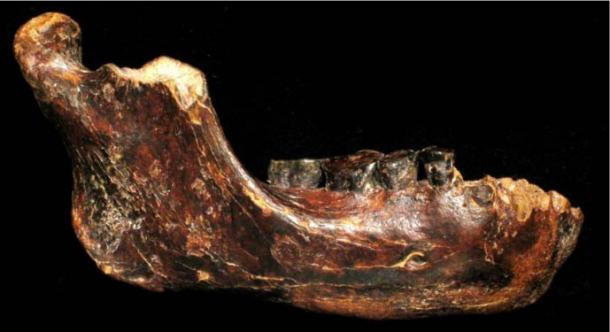 Fossilized jawbone, dubbed Penghu 1, found submerged in seafloor near Taiwan. Dated between 10,000 and 190,000 years ago.