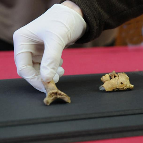 Fossils are 55,000 years old and they belong to a juvenile individual.
