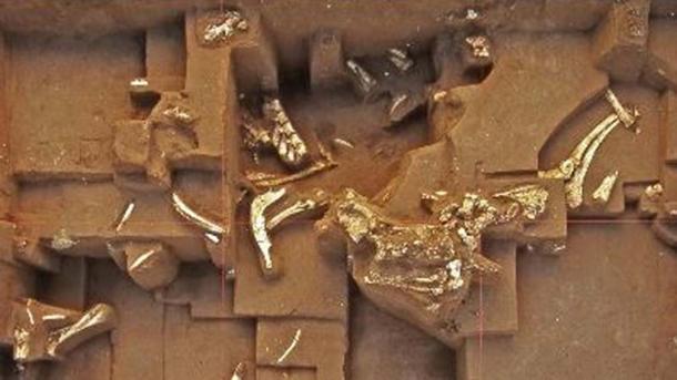 Fossils found at Untermassfeld.