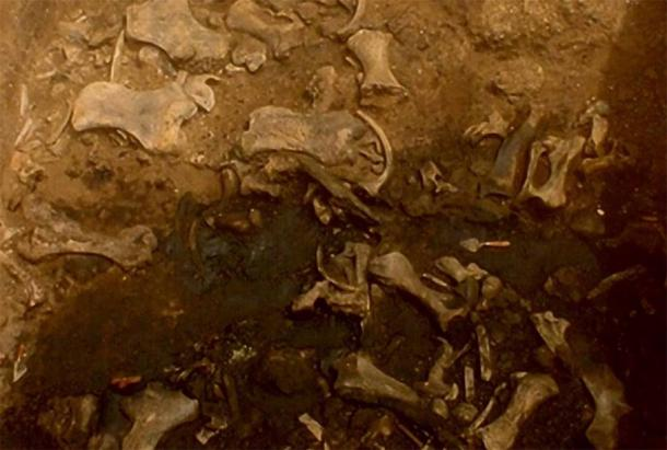 Fossils found in the giant sloth death pit. (La Brea Tar Pits)
