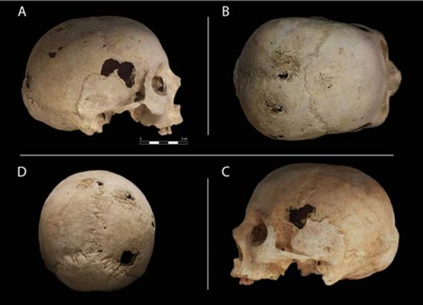 Four views of the skull. (Roberto Miccichè, Giuseppe Carotenuto & Luca Sìneo)