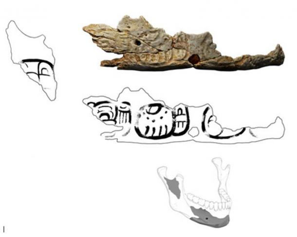 Fragment of the Pacbitun trophy skull. Drawings by Christophe Helmke; Laserscan model by Jesse Pruitt
