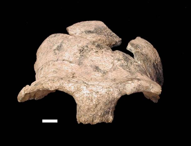 Frontal lobe of the hominim skull found (The Smithsonian Institute)
