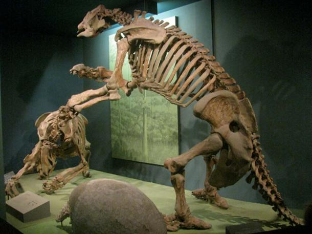 Giant ground sloth (right) and glyptodon -giant armadillo (left) at Smithsonian Museum of Natural History. (CC BY 2.0)