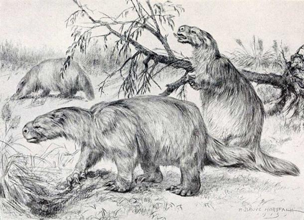 Glossotherium robustum (syn. Mylodon robustus).