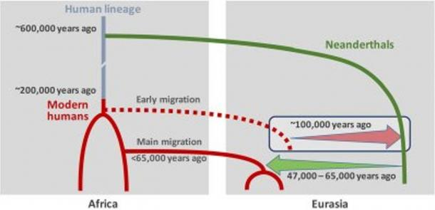 Graphic of interbreeding between modern humans and Neanderthals: Neanderthal DNA in present-day humans outside Africa originates from interbreeding that occurred 47,000 - 65,000 years ago (green arrow).