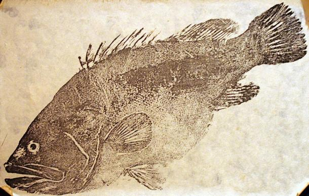 Gyotaku imprint using ink.
