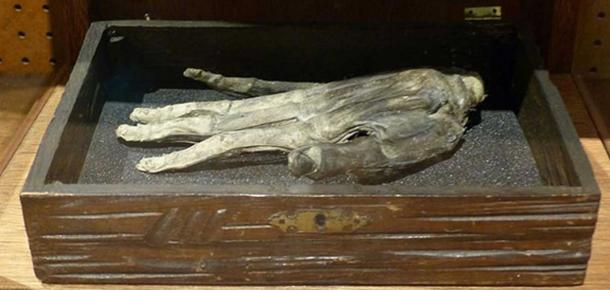 Hand of Glory at the Whitby Museum, England.