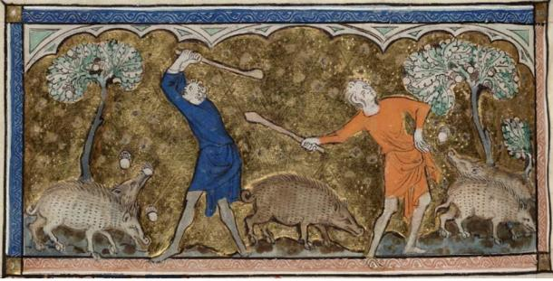 """""""Harvesting acorn to feed swine."""" Detail of a miniature from the Queen Mary Psalter. Held and digitized by the British Library"""