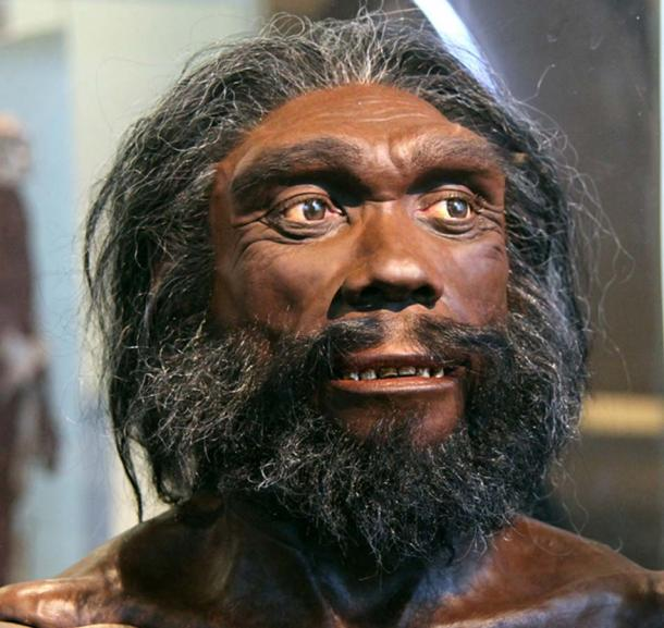 Heidelberg man - facial reconstruction based on the Kabwe skull displayed at the Smithsonian Museum of Natural History. (Tim1965 / CC BY-SA 2.0)